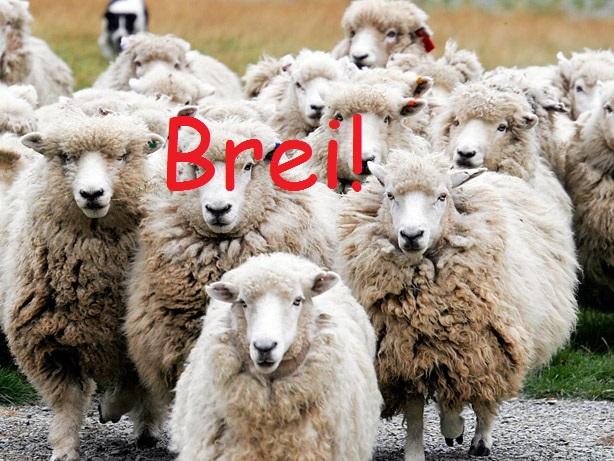 Brei! @ De Societeit
